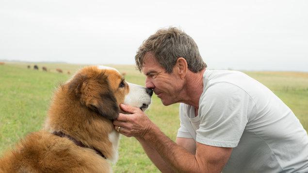 Psia Duša-Egy kutya négy élete