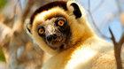 Divoký Madagaskar (diashow Motani)