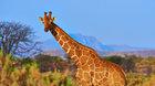 MOTANI - Keňa a gorily