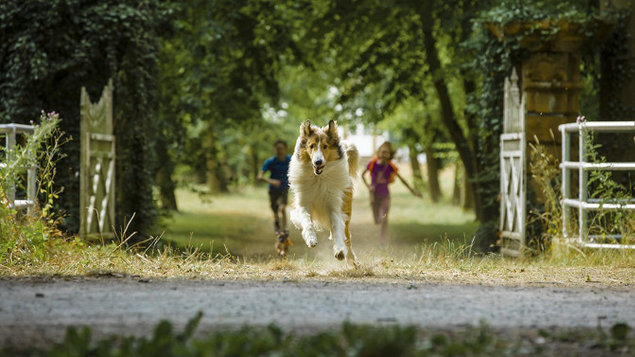 Lassie sa vracia - Lassie Hazatér