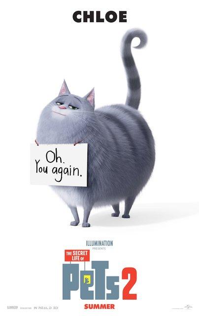Velký bílý kohout těsně černá kočička