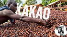 Výstava na stromech: Kakao