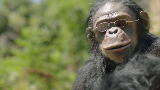 Rok opice - Kino Prostor