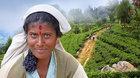 Srí Lanka (diashow M. Loewa)