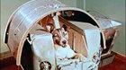 Na počátku byla Lajka aneb Kosmonauti s krunýřem, čenichem, ocasem...
