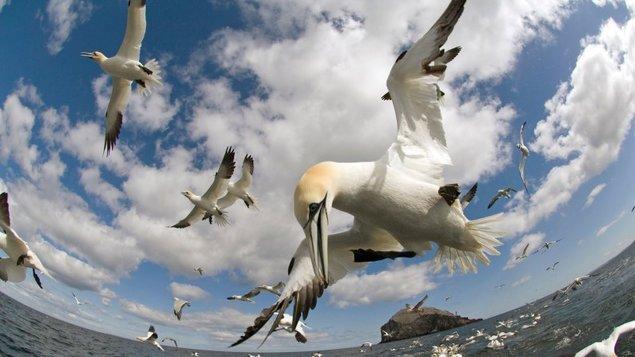 AFO52: Na křídlech ptáků 3D