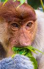 FOH: Borneo, stále ještě zázrak přírody