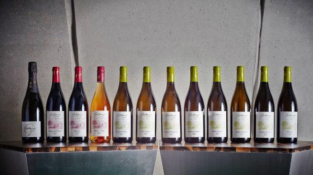 21. 11. 19.00 * Ochutnávka vín vinařství Gotberg