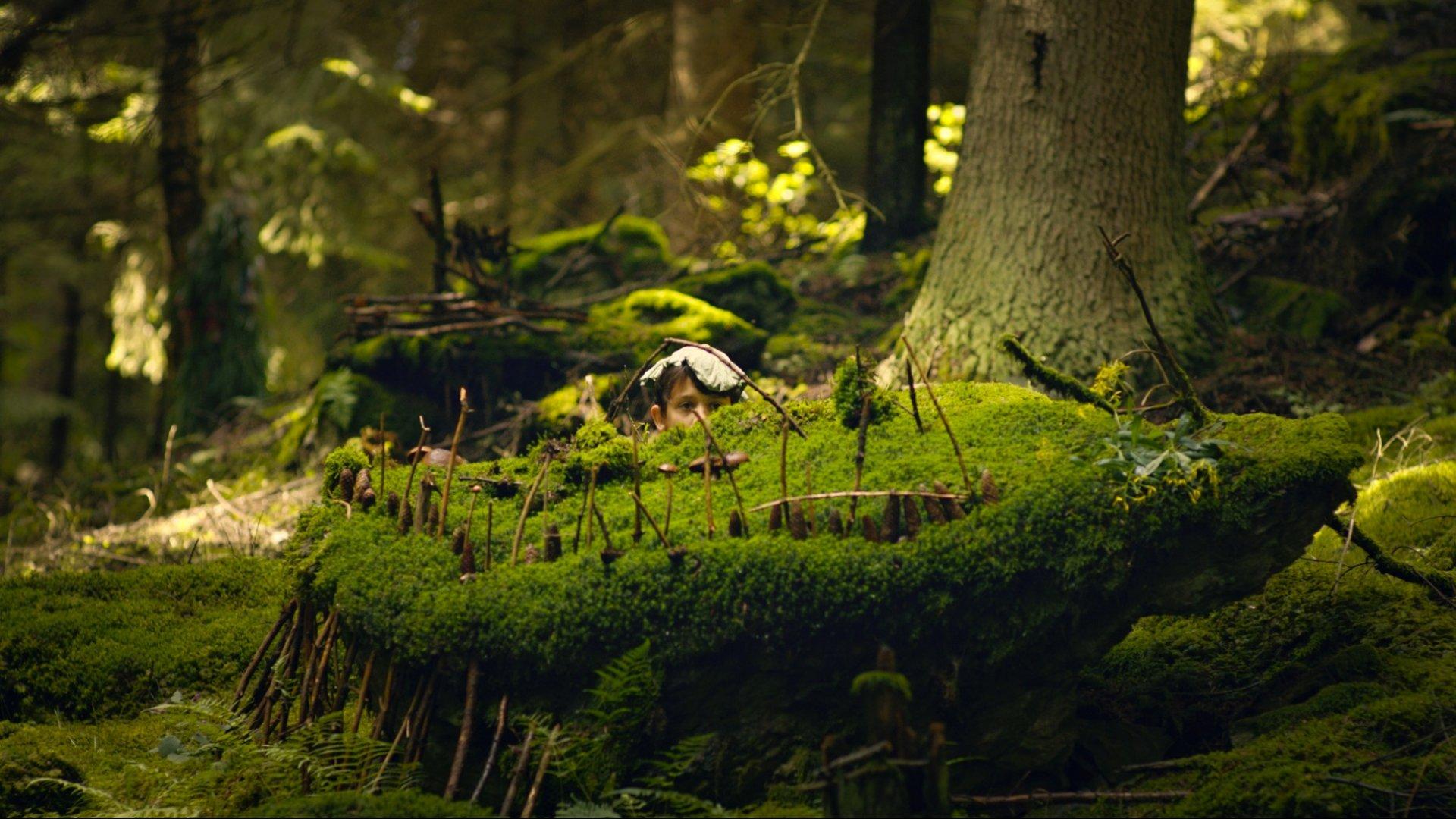 Martin a tajomstvo lesa