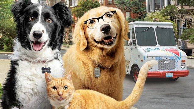 Mačky a psy 3: Labky na to! - Kutyák és macskák 3.: A mancs parancs