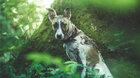 KINO PRO RODINU: Gump – pes, který naučil lidi žít