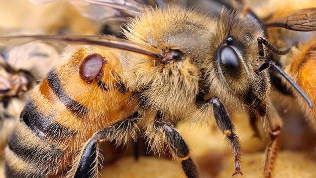 Choroby včel a průběh nemocí