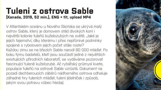 Tuleni z ostrova Sable