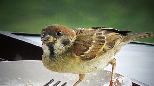 Proč už ptáci nemají rádi přírodu?...
