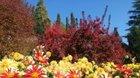 Jiřinkové slavnosti, Botanicus Ostrá