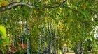 Garden park Jeneč, Bambus centrum Kastner - výlet za květinami