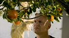 Adamove jablká