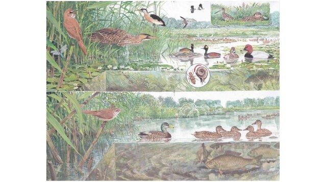 Pavel Procházka - Příroda v ilustraci