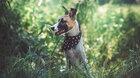 Letní kino: Gump – pes, který naučil lidi žít