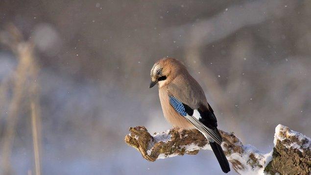 Tajemné světy ptačí říše