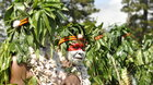 Papuánske srdce | Online
