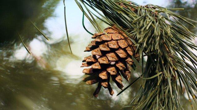 KINO PRO DĚTI: Mazel a tajemství lesa