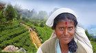 Martin Loew: Srí Lanka - ostrov čaje a slonů