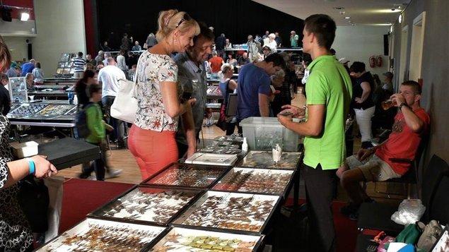 Mezinárodní entomologická výstava