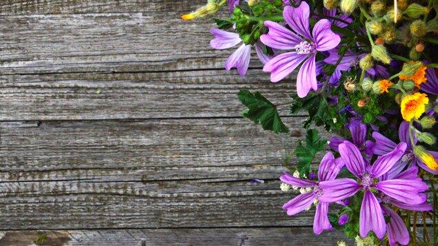 Taje a krásy zahradničení ~ úvodní přednáška