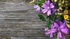 Taje a krásy zahradničení ~ od semínka k úrodě ~ přeloženo