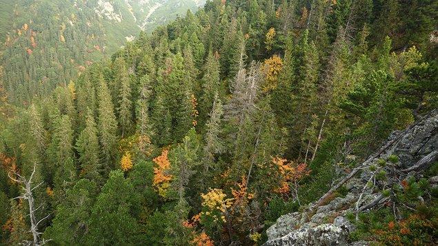 Nesmrteľný les s besedou s tvorcami