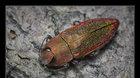 Vlastimil Mihal - makrofotografie hmyzu