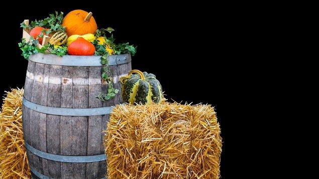 Pelhřimovské dožínky - XIlI. agrární a potravinářský den