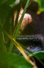 FOH: Radosti a smutky fotografa nejvzácnějších zvířat - beseda