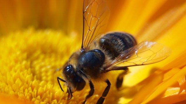 Včely jako důležitá součást lidského života