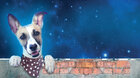 Gump – pes, který naučil lidi žít - LETNÍ KINO - České filmové léto