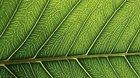 Fotosyntézou to začíná - beseda v muzeu