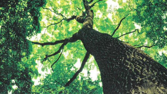 Lesy pro budoucnost