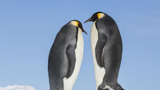 Putování tučňáků:Volání oceánu