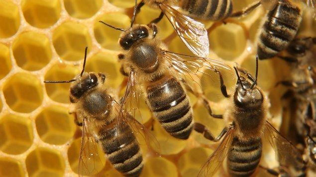 Včelstva a jejich význam