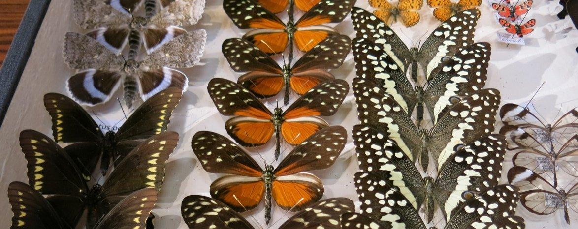 Entomologická výstava